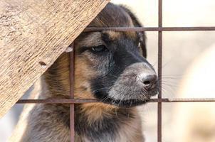 Welpe hinter einem Zaun