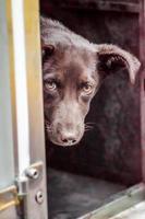 schwarzer Hund späht um die Ecke