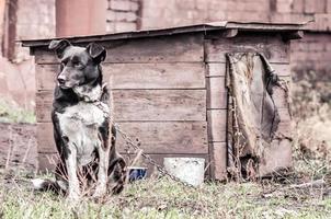 Hund mit einem Holzhaus