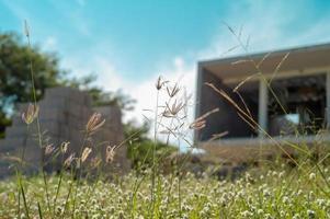 Selektiver Fokus von Blumengras und Unkrautwiese mit verwischten Materialien und im Bau befindlichem Haus im Hintergrund foto