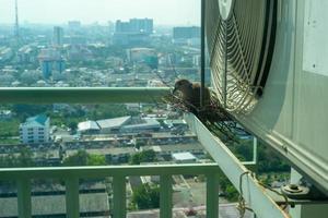 Nahaufnahmevogel in einem Nest auf dem Stahlkäfig der Klimaanlage an der Terrasse der hohen Eigentumswohnung mit unscharfem Stadtbildhintergrund im Sonnenscheinmorgen foto