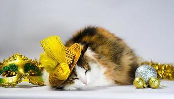 Katze trägt einen goldenen Hut mit Dekorationen foto
