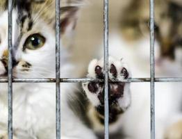 Kätzchen in einem Käfig foto