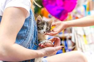 Kätzchen die Arme einer Frau