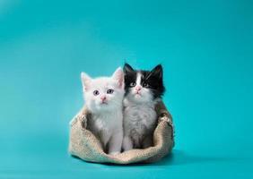 zwei Kätzchen in einem Sack foto