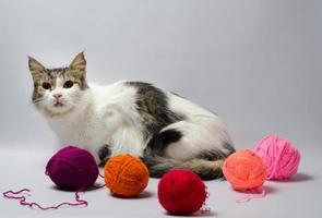 Katze mit Garn auf grauem Hintergrund