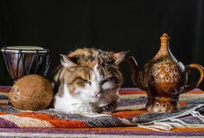 mürrische Katze mit Teekessel und Brot