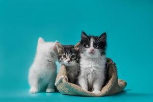 drei Kätzchen mit einer Tasche foto