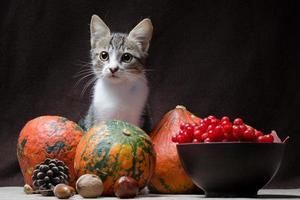 Katze mit Herbstfrucht