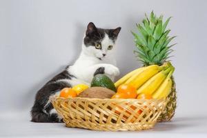 Schwarzweiss-Katze mit tropischen Früchten