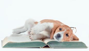 Hund, der auf einem Buch mit Brille liegt
