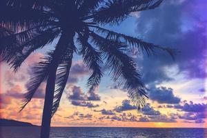 Silhouette einer Palme foto
