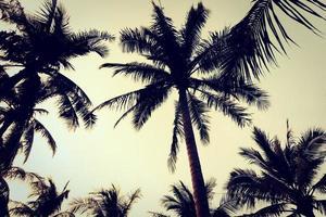 Silhouette von Palmen