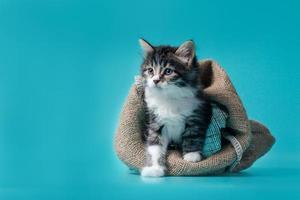 Kätzchen aus einer Tasche gehen foto