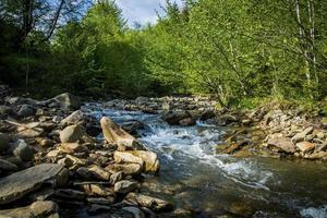 Gebirgsfluss mit grünem Wald foto