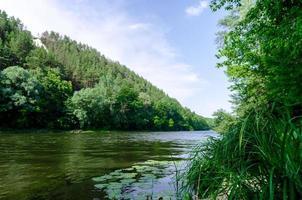 Fluss und grüner Wald foto