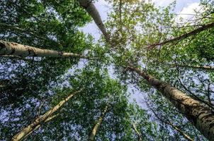 Wurmperspektive von Bäumen foto