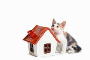 Kätzchen mit Miniaturhaus foto
