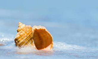 Muschel im Wasser foto