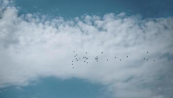 Vogelschwarm in einem blauen Himmel foto