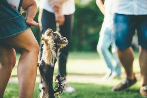 Leute, die mit einem Hund draußen spielen foto