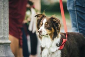 Hund mit Besitzer in einem Park foto