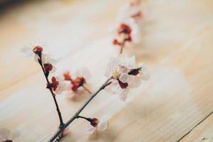 Zweig der rosa Blüten foto