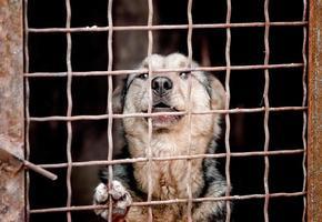 Hund hinter einem Zaun foto