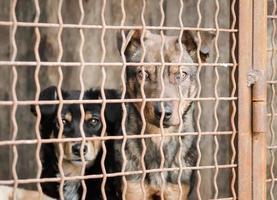 zwei Hunde hinter einem Zaun foto