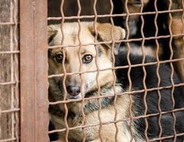 brauner Hund hinter einem Zaun foto