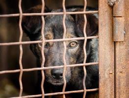 schwarzer und brauner Hund hinter einem Zaun foto