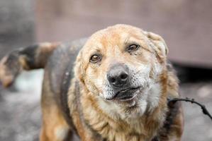 Hund mit traurigen Augen foto