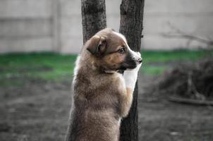 Hund auf Baum foto