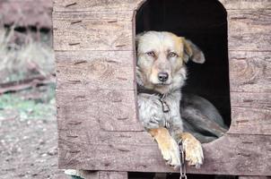 Hund an einer Kette in einer Hundehütte draußen foto