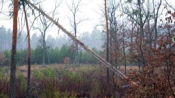 Morgen im Herbstwald mit nebligen fabelhaften umgestürzten Baum foto