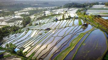 Luftaufnahme von Bali Reisterrassen foto