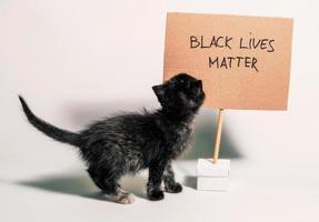 Kätzchen mit schwarzen Leben Materie Zeichen foto