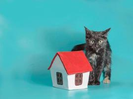 Katze mit einem Miniaturhaus foto