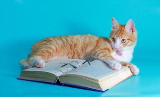 orange Katze mit einem Buch und einer Brille