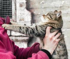 Person, die eine getigerte Katze hält foto