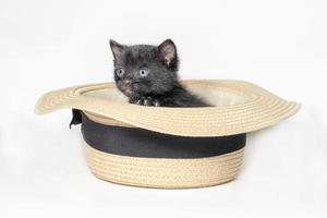 schwarzes Kätzchen in einem Hut foto