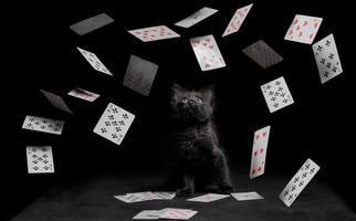 schwarze Katze und Spielkarten foto