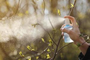 weibliche Hände hält Behälter und besprüht Ast mit Knospen gegen helles Sonnenlicht im Garten. Pflege und Behandlung von Pflanzen. selektiver Fokus. foto