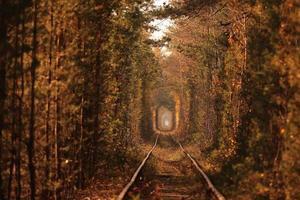 Tunnel der Liebe. Tunnel der Liebe in der Ukraine. eine Eisenbahn im Herbstwaldtunnel der Liebe. alter mysteriöser Wald. foto