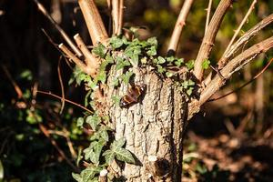 Schmetterling auf einem Baumstamm foto