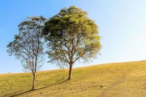 zwei Bäume auf einem Hügel foto