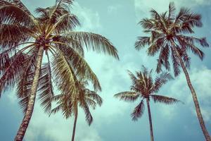 Vintage Kokospalmen foto