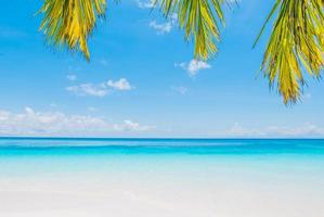 schöner tropischer Strand mit Palmblättern foto