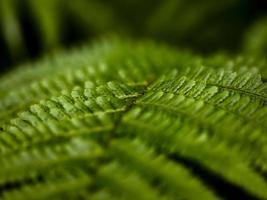 wild wachsende Farne im Wald foto