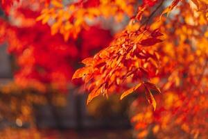 Nahaufnahme von roten und orange Blättern auf einem Baum foto